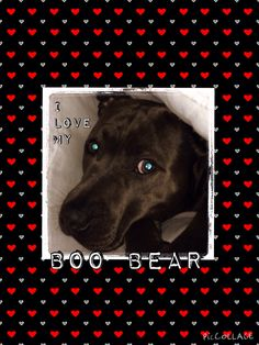 I♥️Boo Bear ( Collage - Mug )