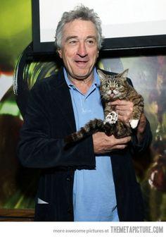 Cat and Robert DeNiro | felines & their fellas |