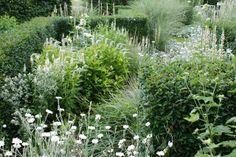 white plant ideas