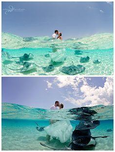 cayman islands wedding - bride and groom with stingrays