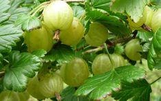 Die 5 gesündesten Beeren-Sorten!