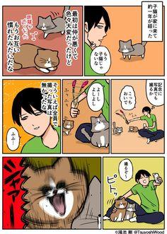 Japan Funny, Cat Comics, Neko, Comedy, Funny Pictures, Cute Animals, Entertaining, Manga, Humor