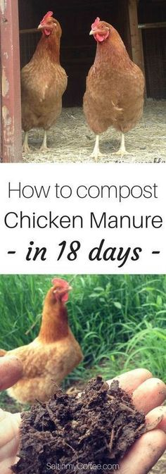 Gardening Compost Did you know you can turn the deep litter from your chicken coop into garden ready compost in just 18 days? - Did you know you can compost chicken manure into good, garden-ready black gold.in just 18 days? Chicken Barn, Best Chicken Coop, Backyard Chicken Coops, Chicken Coop Plans, Building A Chicken Coop, Chicken Runs, Backyard Farming, Chickens Backyard, Chicken Tractors