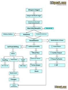 I'm reading Anaphylactic Shock Pathophysiology on Scribd Pathophysiology Nursing, Pharmacology Nursing, Nursing Student Tips, Nursing Students, Rn School, Medical School, Medical Posters, Teaching Methods