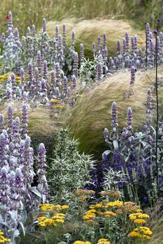 Stachys and Stipa