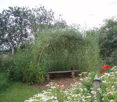 Spencer Jenkins :: Living Willow Structures Living Willow Fence, Willow Bush, Flower Garden Plans, Garden Ideas, Unique Centerpieces, Garden Planning, Trellis, Garden Landscaping, Garden Design