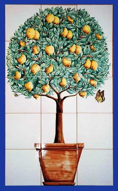 Lemon Tree 02