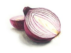 Onions make you cry! know the reason now Fruit Illustration, Food Illustrations, Botanical Illustration, Botanical Prints, Watercolor Fruit, Fruit Painting, Watercolor Paintings, Realistic Drawings, Colorful Drawings