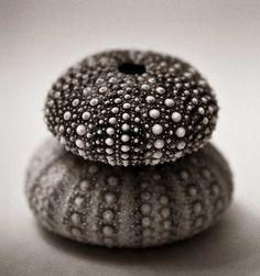Sea Urchin skeletons by Robin Black Photography, via Flickr