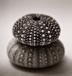 Sea Urchin skeletons by Robin Black Photography, via Flickr
