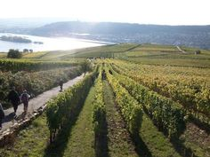 Rudesheim Germany, wine country