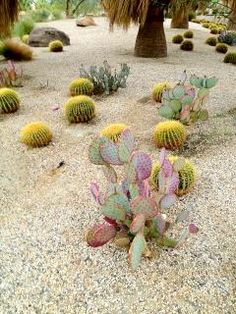 Succulent Gardening, Succulents Garden, Planting Flowers, Desert Life, Palm Desert, Gardens Of The World, Desert Colors, Coachella Valley, Desert Homes