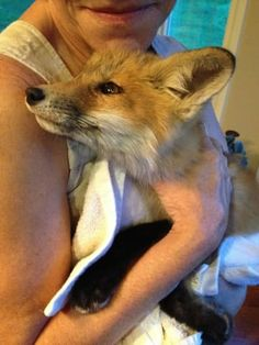 18 Reasons Foxes Are The Most Adorable Creatures In Existence