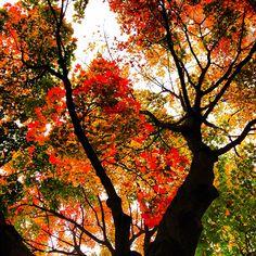 Fall | by damaris.reda