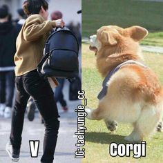 Corgi sounds like meat in hangul Jungkook V, Bts Bangtan Boy, Foto Bts, Bts Gifs, K Pop, Boy Band, Bts Memes Hilarious, Funny Vid, Taehyung Fanart