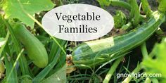 Vegetable families sounds like a sophisticated concept when in reality it is very simple: know which crops are related and either keep them together in the garden bed, or prevent them from following one another when practicing crop rotation. TraditionalCookingSchool.com