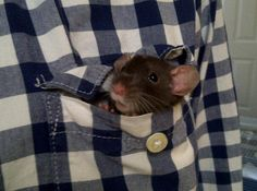 pocket friend. this is just what cory does with our rats.