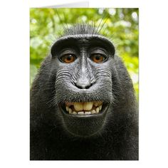 monkey takes a selfie using photographer Dave Slater's camera--what next?Indonesian monkey takes a selfie using photographer Dave Slater's camera--what next? Primates, Animals And Pets, Baby Animals, Funny Animals, Cute Animals, Wild Animals, Greek Animals, Macaque Monkey, Tier Fotos