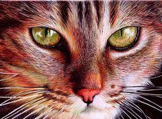 Yellow Eyes. BIC Ballpoint Pen by Samuel Silva (Portugal)