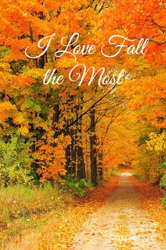 I could walk for hours down that road!Follow my new Autumn Blog: http://autumns-glory.tumblr.com/