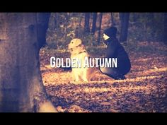 Golden Autumn Golden Retriever