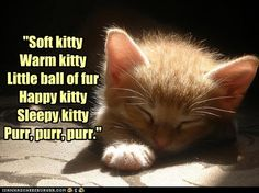 "Sing ""Soft Kitty"" to me"