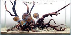 discus in amazon | Adventures in Aquascaping Archives - TFH Magazine BlogAdventures in ...