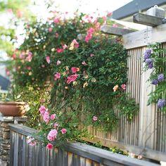 Kletterpflanzen Garten Rosen Holz Pergola Design