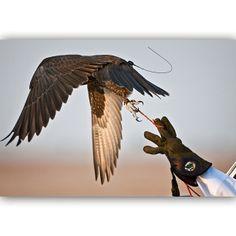 5/13 Falcon in flight....