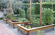 pretty garden trellises Spring Garden Update | Eat • Drink • Garden • Santa Barbara, California