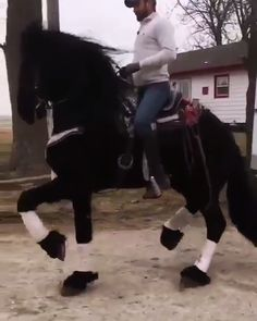 funny horse pictures with captions . Big Horses, Horses And Dogs, Cute Horses, Horse Love, Show Horses, Funny Horse Videos, Funny Horse Pictures, Funny Horses, Horse Photos