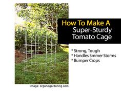 Building a strong tomato cage might not be necessary, but it certainly makes your garden look neater and more organized. Giving the support your tomatoes would like only adds to the benefits of keeping them safe and growing tall. Building a cage able to stand up against the winds and rain, keeping the plants secure, …
