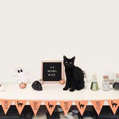 #HalloweenDecor | via @elinorsophia on Instagram. Halloween Decorations, Halloween Party, Halloween Ideas, Housewarming Party, Creepy Cute, Mini, Party Planning, House Warming, Witch