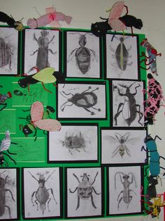 Lady Bay Primary School, Nottingham Insects display Y4