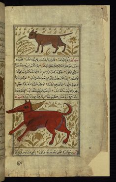 A wild cat and an animal called sīrāyis Wonders of Creation  by Qazwīnī 1293 was translated to Turkish in 1717  completed by Rūzmah-ʾi Nāthānī - W659