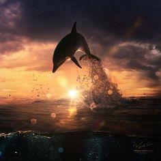 Dolphin Jumping Out Of Water www.flowcheck.es Taller de equipos de buceo #buceo #scuba #dive