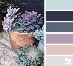 { succulent hues } image via: @petiteharvest