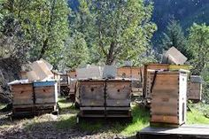 off grid living - bees = life