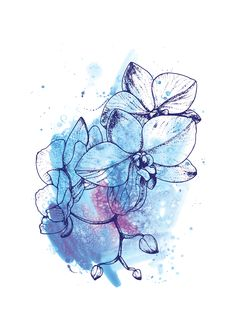 Blue Orchids Fine Art Print, Watercolour Digital Illustration Artwork Pen Linework Botanical Flowers Nature. In this piece I used a combination of technical drawing pens to create the linework and detail for the flowers, and watercolour paints to create the coloured background. I used digital illustration sofware to bring the two aspects together to create one finished piece of art.