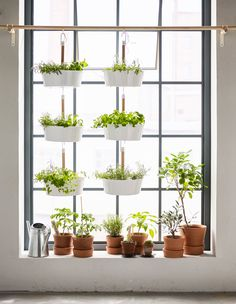 Most of us probably have a few pots on the window sill, but if you have bigger green ambitions, you could try hanging plants from above.