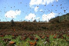 Book: Barbara Kingsolver On 'Flight Behavior' Flight Behavior, Monarch Butterfly Migration, Barbara Kingsolver, Dc World, Travel Sights, Winter Haven, Online Travel, Natural Phenomena, Natural Wonders