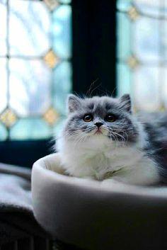Pretty Kitty ❤️