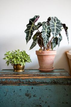 "Propagation Station: How To Make Plant Babies | Learn how to ""go forth and multiply"" your favorite indoor houseplants–for free–with these helpful resources on popular plant propagation and beyond. It's the best budget-friendly way to expand the green in your home."