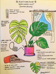 Indoor Trees, Indoor Plants, Indoor Garden, Cactus Plants, Garden Plants, Swiss Cheese Plant, Growing Plants Indoors, Plant Projects, Monstera Deliciosa