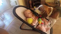 Aww! Watch this apologetic dog shower baby with gifts