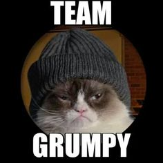 Grumpy Cat - Grumpy Cat - Ideas of Grumpy Cat - Grumpy Cat The post Grumpy Cat appeared first on Cat Gig. Grumpy Cat Quotes, Funny Grumpy Cat Memes, Funny Cats, Funny Animals, Cute Animals, Grumpy Kitty, Kitty Kitty, Animal Memes, Funny Memes