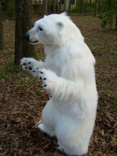 realistic polar bear costume - Google Search