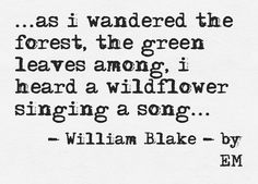 i heard a wildflower singing a song . . .