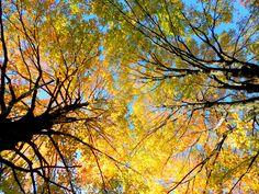 Fall Trees - Salem, VA