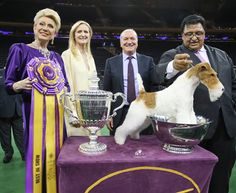 Best In Show 2014 Name: GCH Afterall Painting The Sky Owner: Victor Malzoni Jr & Torie Steele & S & M Olund & D Ryan Breed: Fox Terrier (Wire)